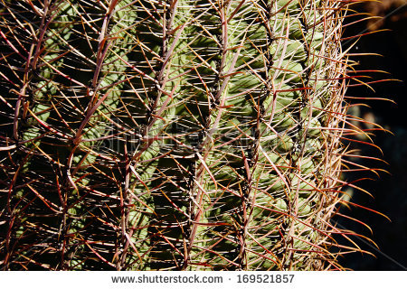 Ferocactus Cylindraceus Stock Photos, Royalty.
