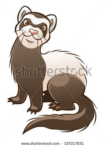 Vector cartoon funny ferret isolated on the white background.