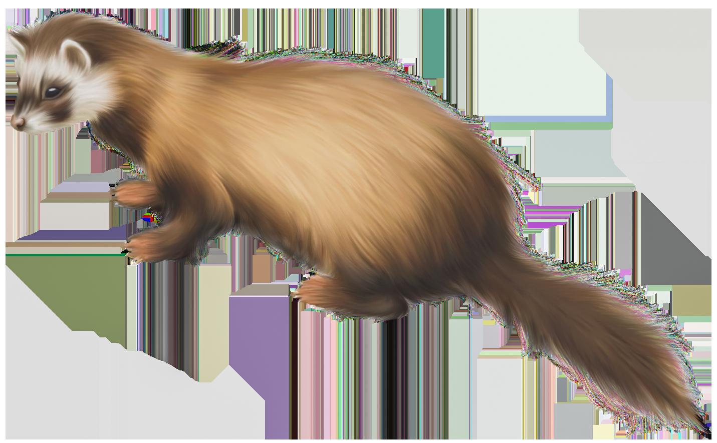 Ferret PNG Clip Art.