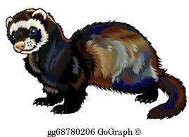 Ferret Clip Art.