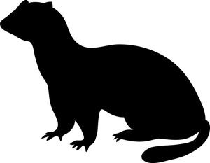 Ferret Clip Art Images.