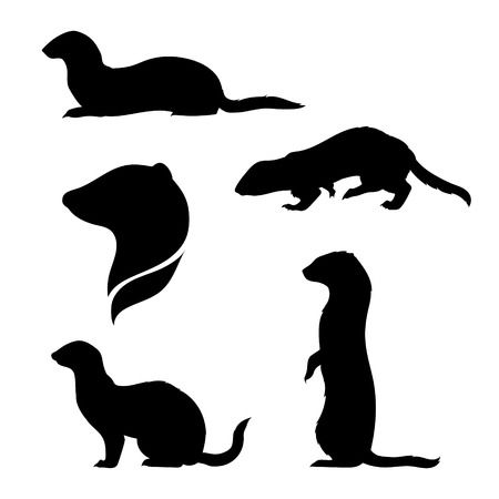 917 Ferret Cliparts, Stock Vector And Royalty Free Ferret Illustrations.