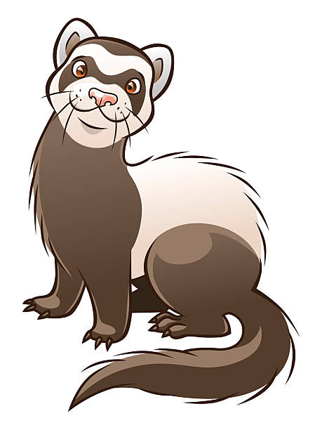 Best Ferret Illustrations, Royalty.