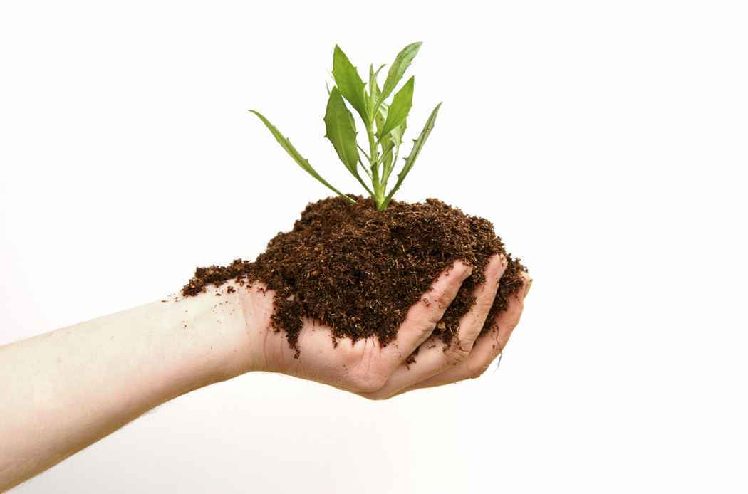 Essay on natural, artificial or chemical fertilizers.