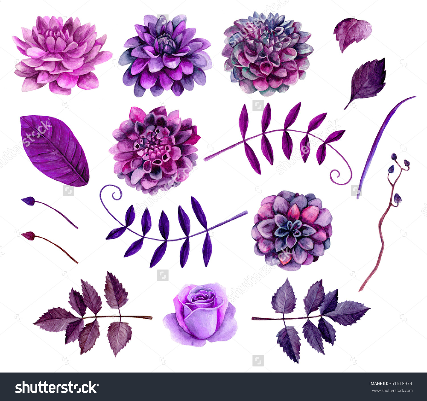 Appealing purple flowers vector photographs