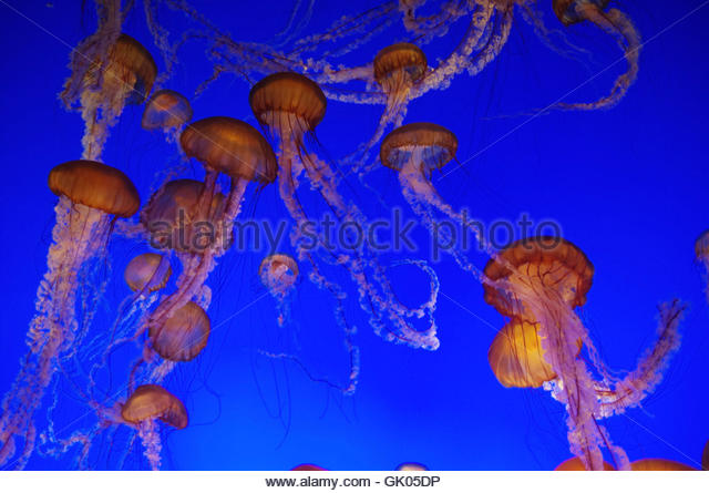 Tentacular Stock Photos & Tentacular Stock Images.
