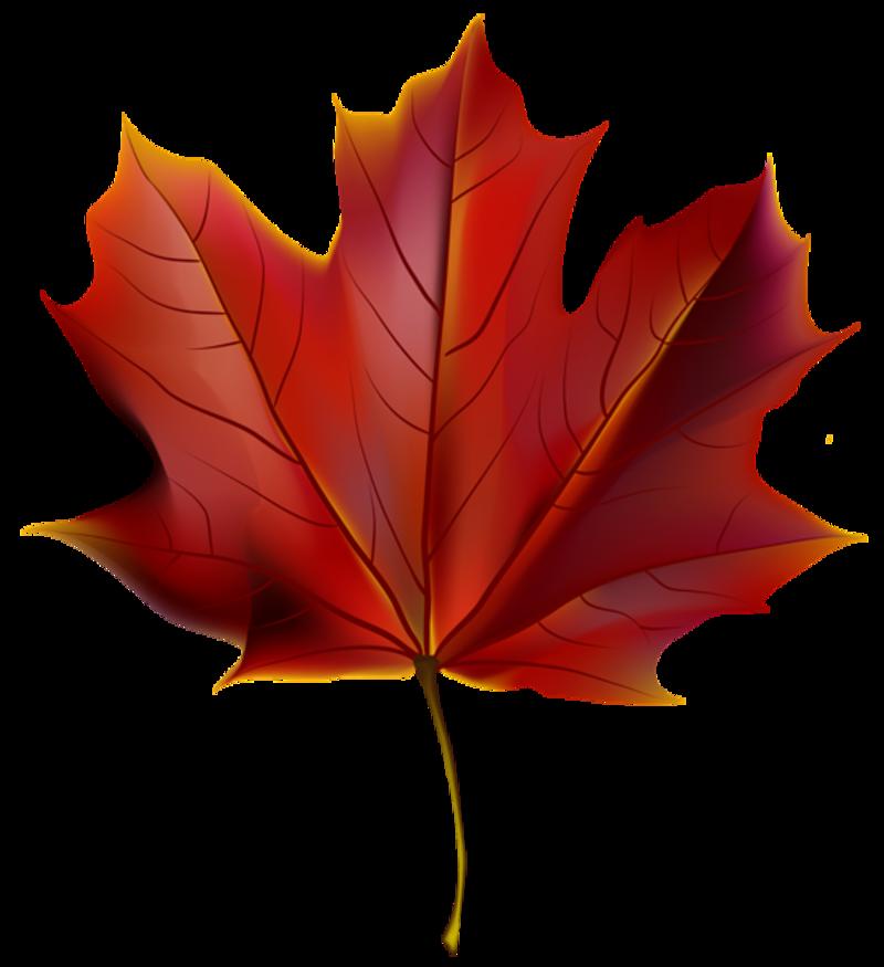 clipart feuilles etc.