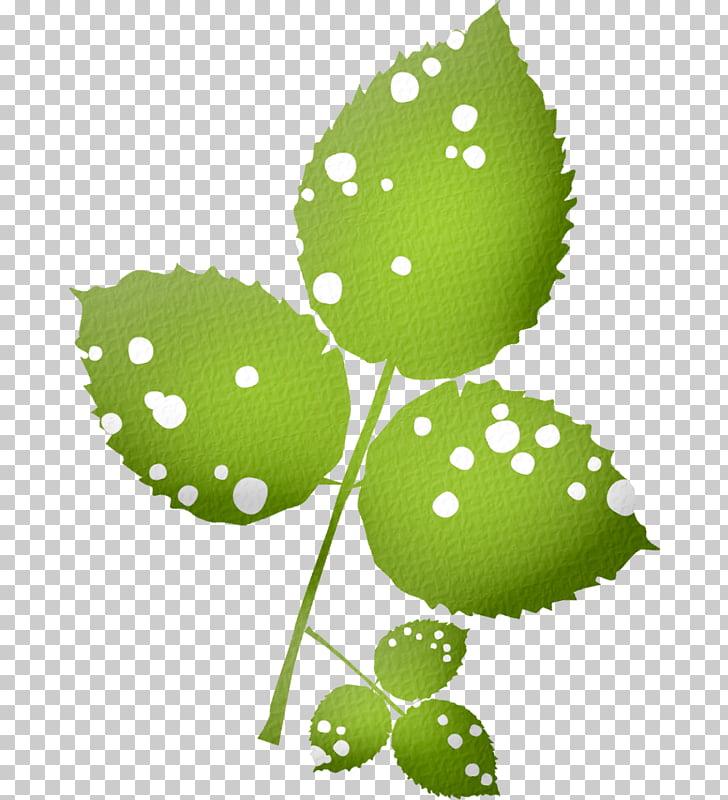 Leaf Plant stem, feuille PNG clipart.