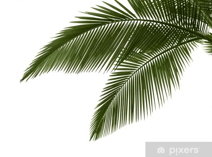 Sticker Feuilles de palmier sur fond blanc Pixerstick.