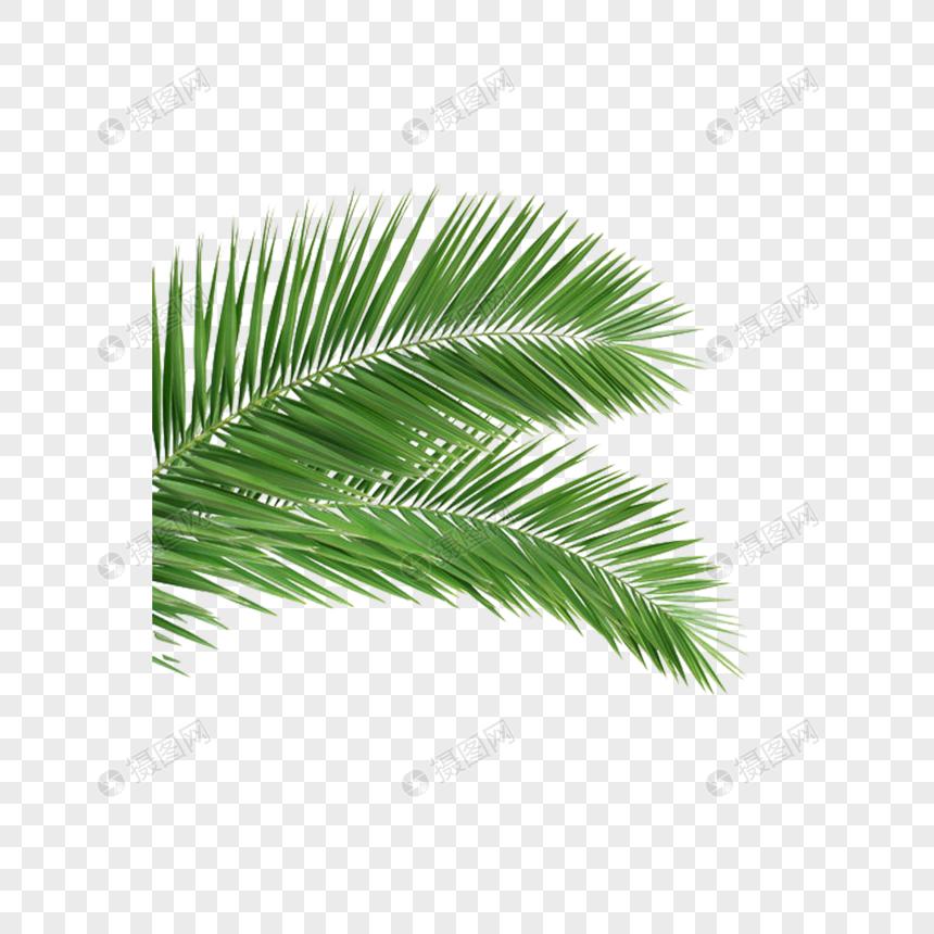Photo de feuilles de palmier_Numéro de l'image400644541_Format d.