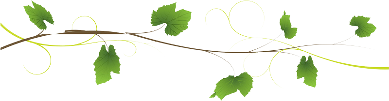 Feuille png 9 » PNG Image.