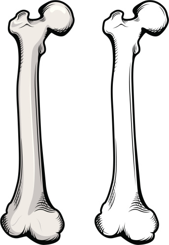 Femur Clip Art, Vector Images & Illustrations.