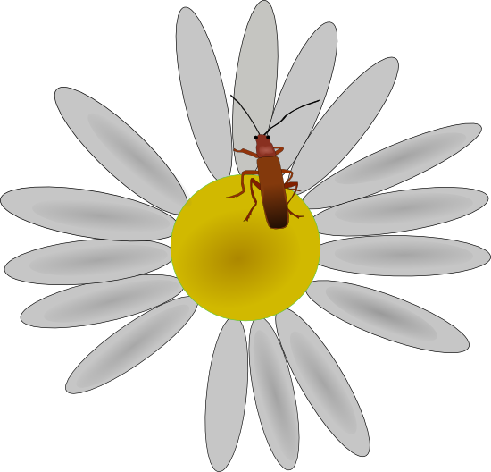 Daisy Clipart and Vector Illustrations.