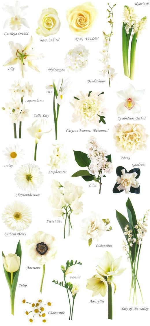 1000+ ideas about Flower Names on Pinterest.