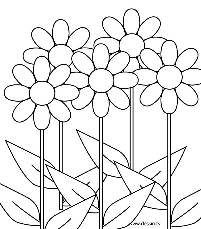 1000+ images about Leaf & Petal Outlines on Pinterest.