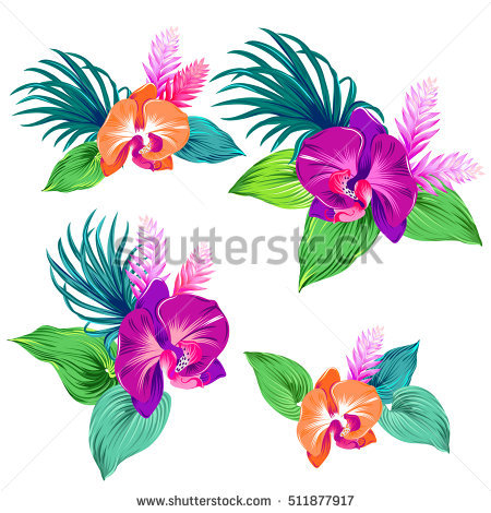 Orchid Vector Stock Photos, Royalty.