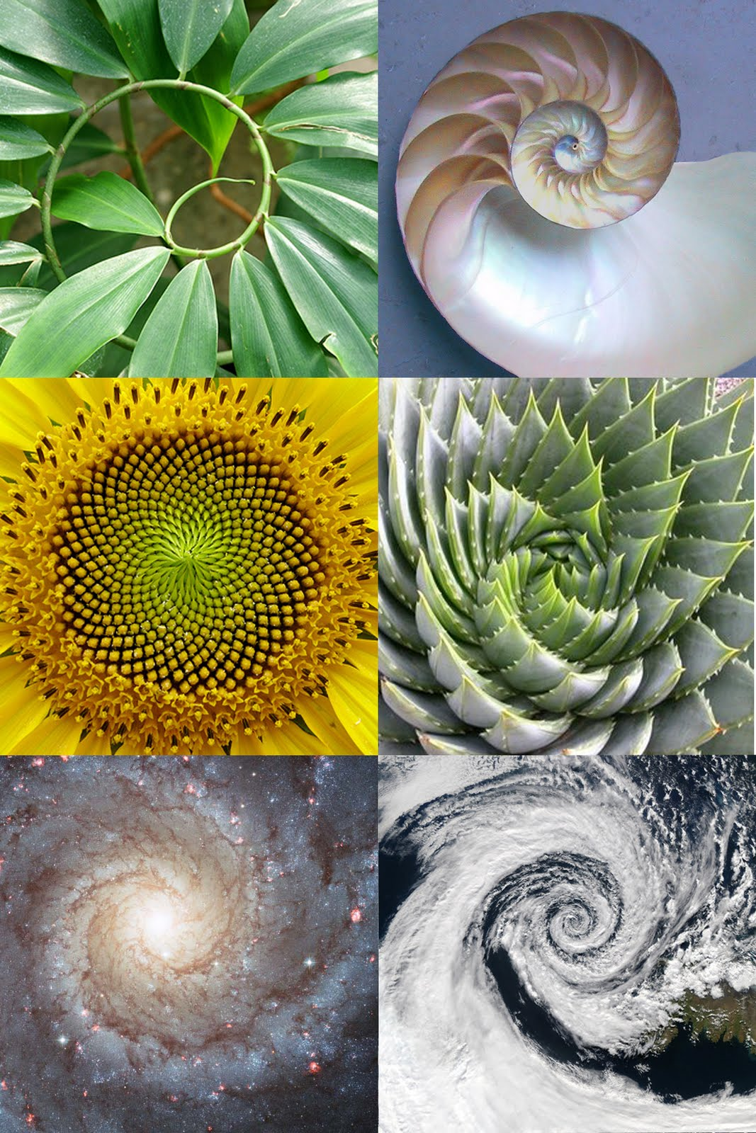 1000+ images about Fibonacci Spirals in Our Lives (Also includes.