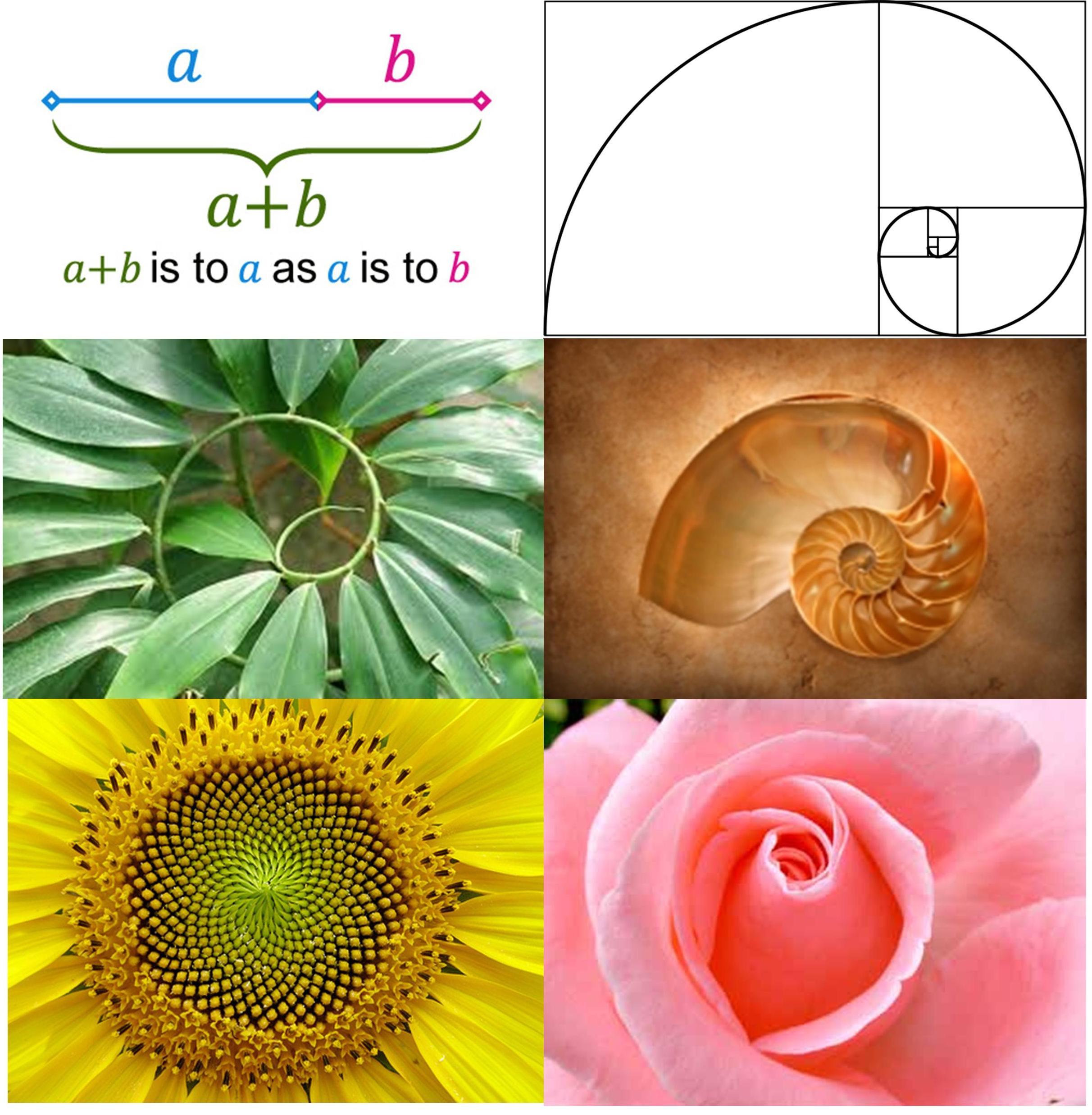 The Golden Spiral …. Fibonacci Numbers!!.