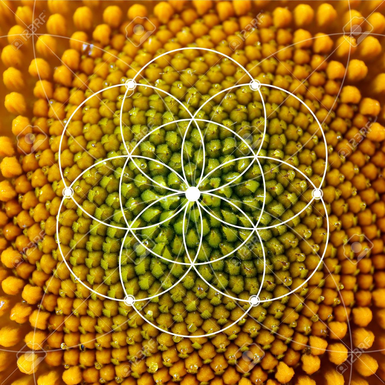 589 Fibonacci Stock Illustrations, Cliparts And Royalty Free.