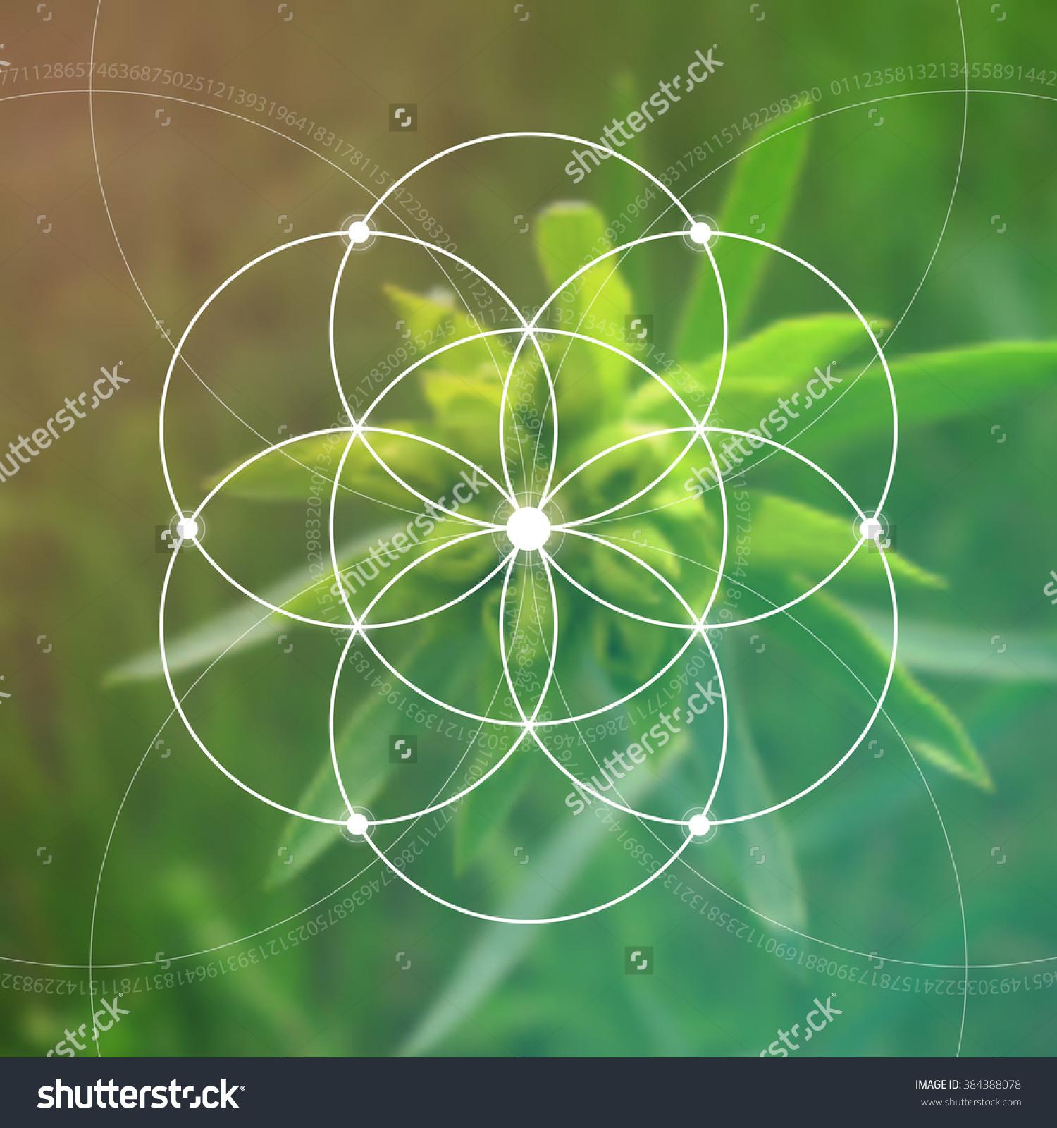 Sacred Geometry Mathematics Nature Spirituality Nature Stock.