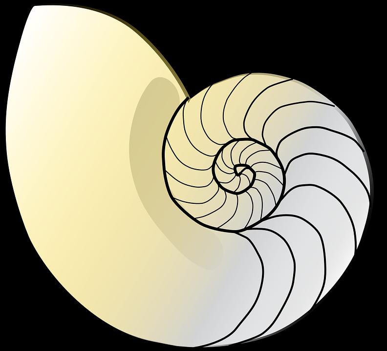 Free vector graphic: Shell, Nautilus, Fibonacci, Nature.