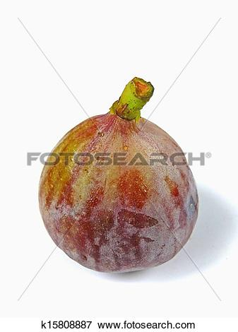 Picture of Fig fruit. Ficus carica L. Moraceae k15808887.