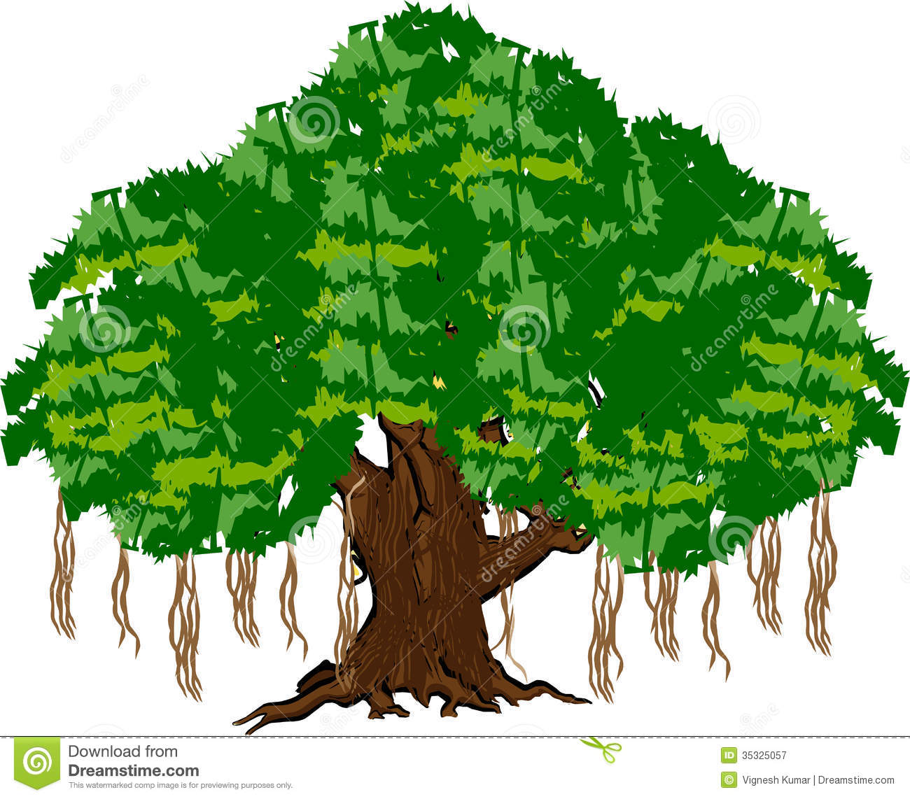 Ficus Stock Illustrations.