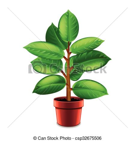 Vector Clipart of Ficus tree in pot isolated on white vector.