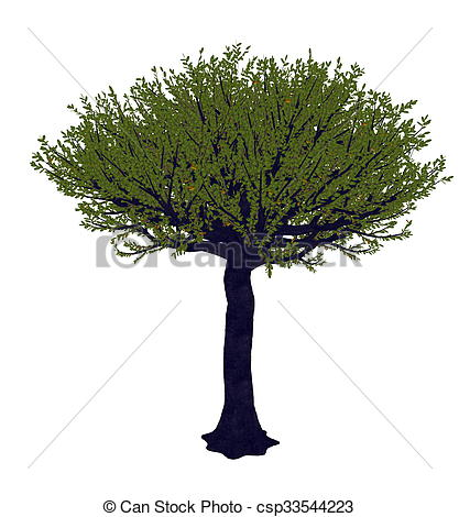 Clip Art of Forest sandpaper fig or tree, ficus exasperata.