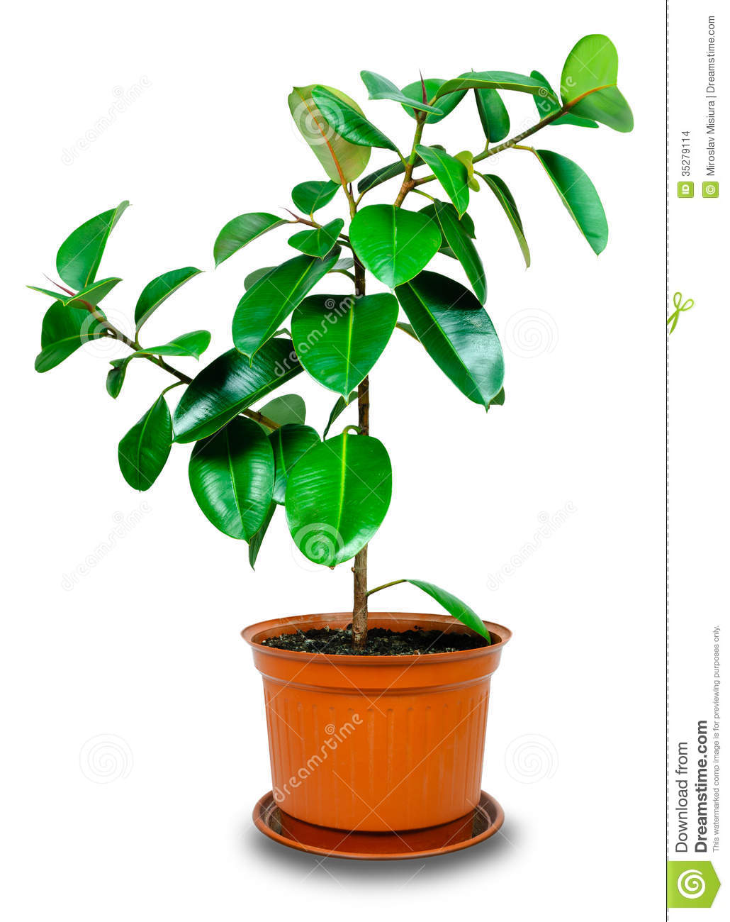 Potted Plant Clipart.