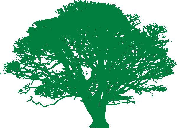 Ficus Clip Art at Clker.com.