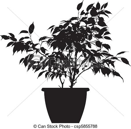 Ficus Illustrations and Clipart. 206 Ficus royalty free.