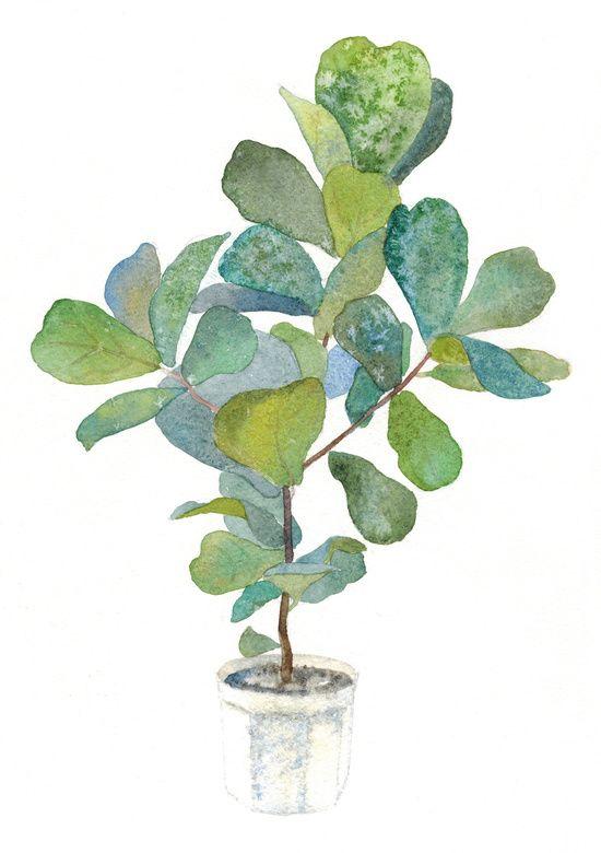 Fiddle Leaf Fig Tree Art Print.