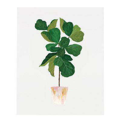 fiddle leaf fig illustration.