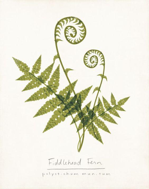 fiddlehead fern tattoo.