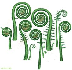 Fiddlehead fern clipart.