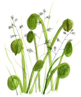 1000+ images about flowers and grasses on Pinterest.
