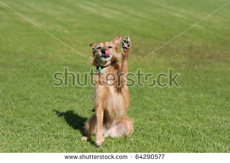 Clever Dog Stock Photos, Royalty.