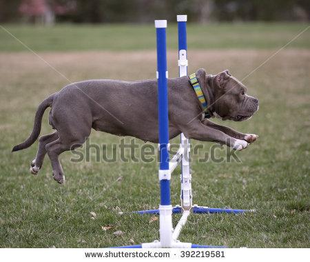 GoDog Photo's Portfolio on Shutterstock.