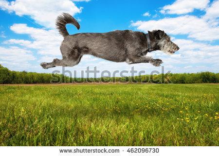 "sky_terrier"" Stock Photos, Royalty."