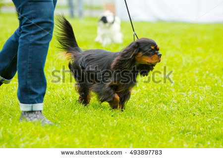 Dog Out Owner Stand Stock Photos, Royalty.
