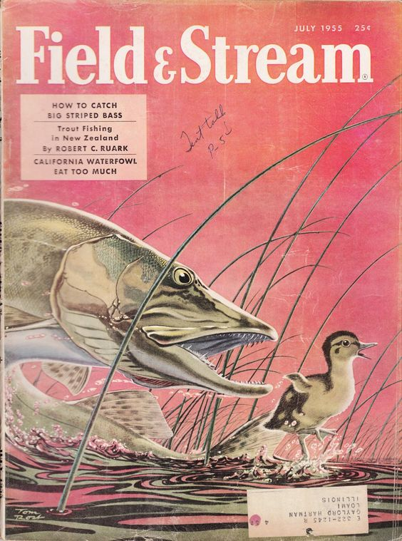 July 1955 cover of Field & Stream magazine. Cover illustration by.