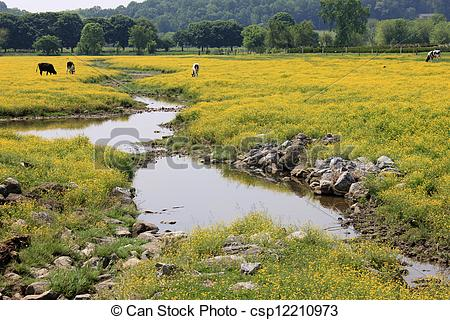 Picture of Buttercup field with stream and cow.