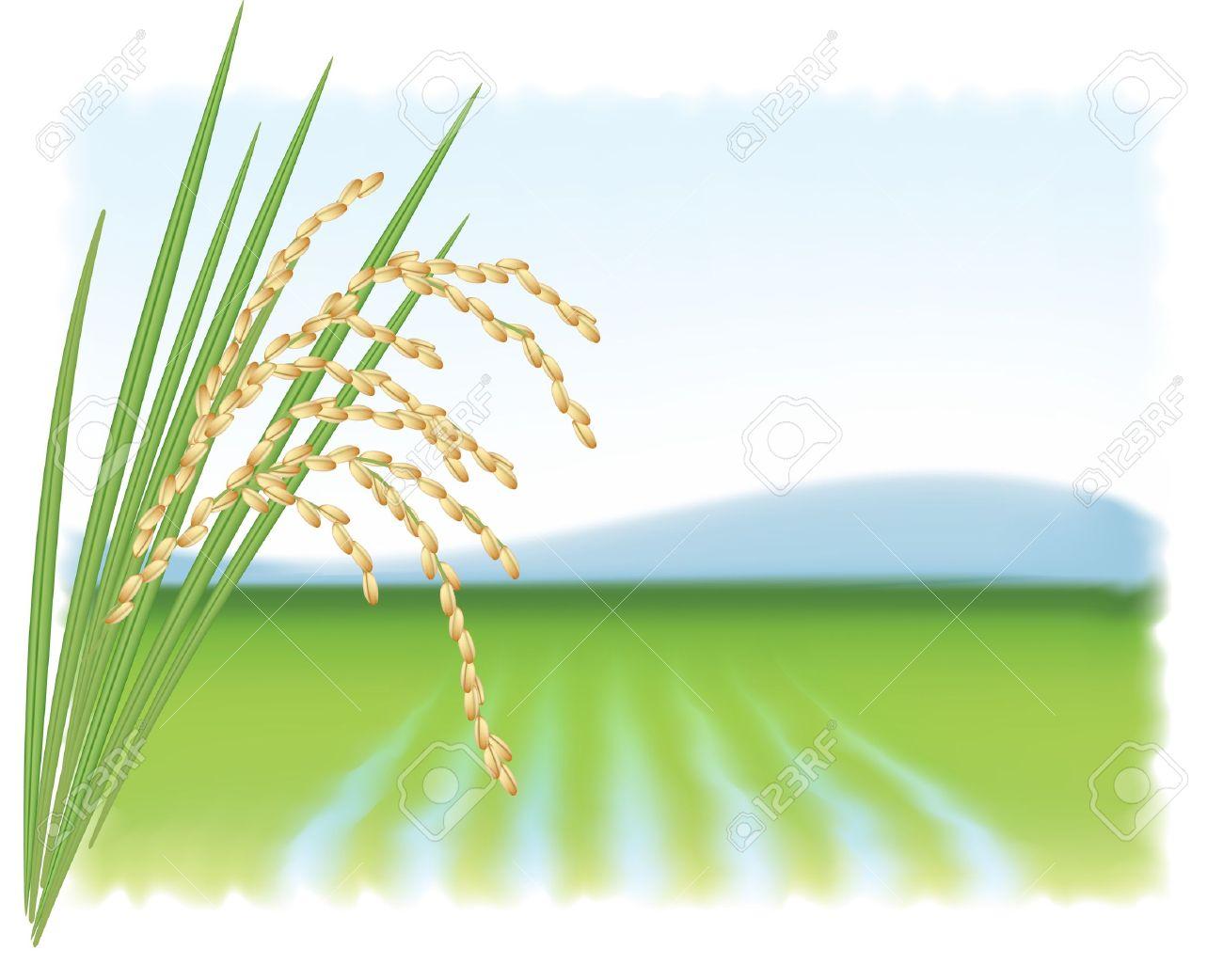 Rice tree clipart.