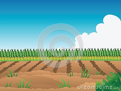 Crop Field Clipart.