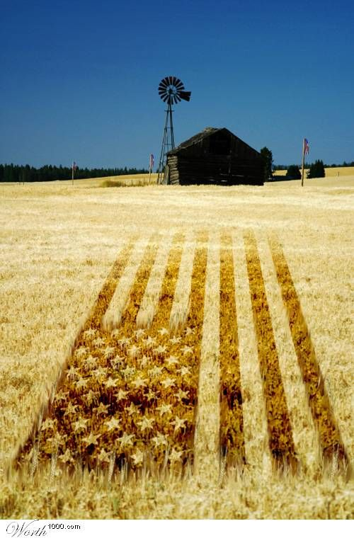 1000+ images about Crop Circles on Pinterest.