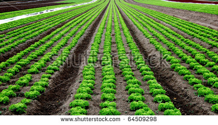 Farmland Field Agriculture Stock Photos, Royalty.