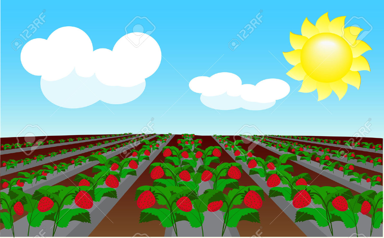 Strawberry Field Royalty Free Cliparts, Vectors, And Stock.