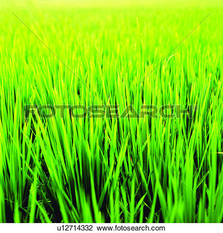 Stock Photo of Cultivating, Planting, Field, Agriculture, Plant.