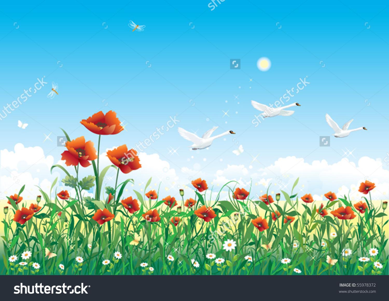 Field Poppy Stock Vector 55978372.